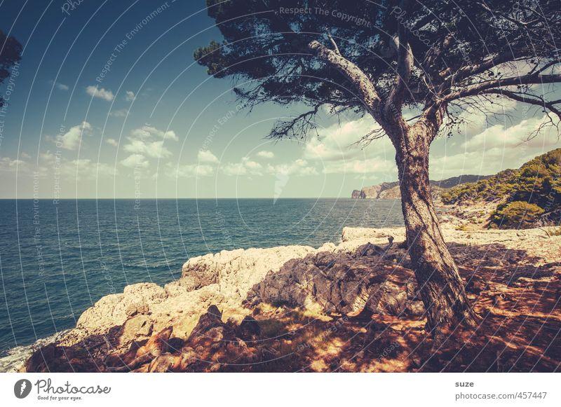 Einer, der umarmt werden will Freizeit & Hobby Ferien & Urlaub & Reisen Sommer Strand Meer Berge u. Gebirge Umwelt Natur Landschaft Erde Himmel Baum Küste Bucht