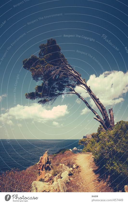 Vom Winde verweht ... Himmel Natur Ferien & Urlaub & Reisen Sommer Baum Meer Landschaft Wolken Umwelt Reisefotografie Wege & Pfade Küste Horizont