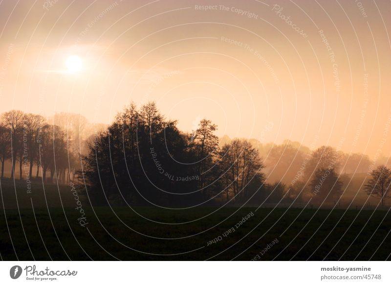 Verträumte Landschaft Himmel Baum Sonne Einsamkeit Nebel Horizont Erde Romantik unklar