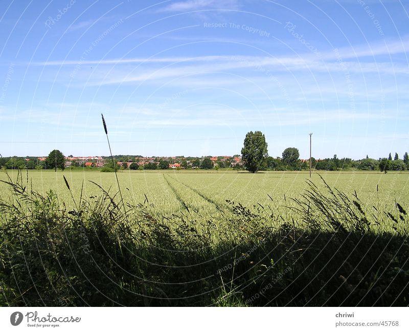 Sommer Landstrich Wiese Landschaft Graffiti Kornfeld