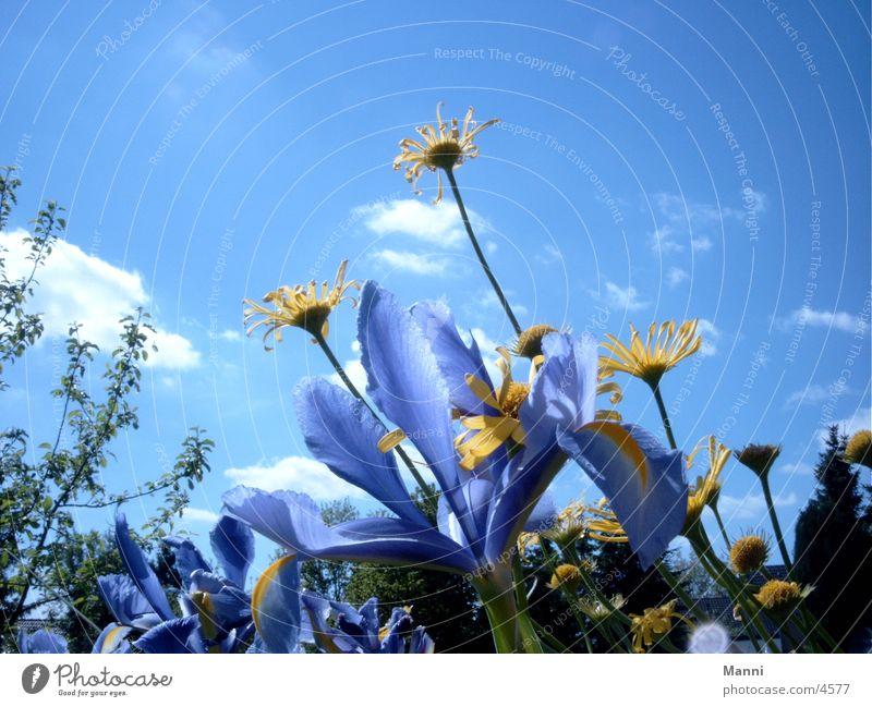 Blumen, Wolken