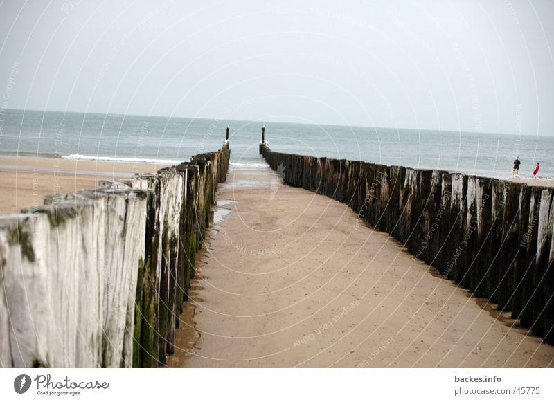 ab ins meer Meer Strand Algen Europa Wasser Sand Pfal Abend Abgang