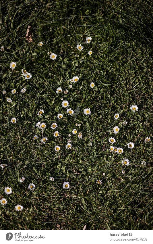 Gänseblumen Natur Ferien & Urlaub & Reisen Pflanze schön Sommer Erholung Landschaft ruhig Freude Tier Gesunde Ernährung Leben Wiese Glück Gesundheit Lifestyle