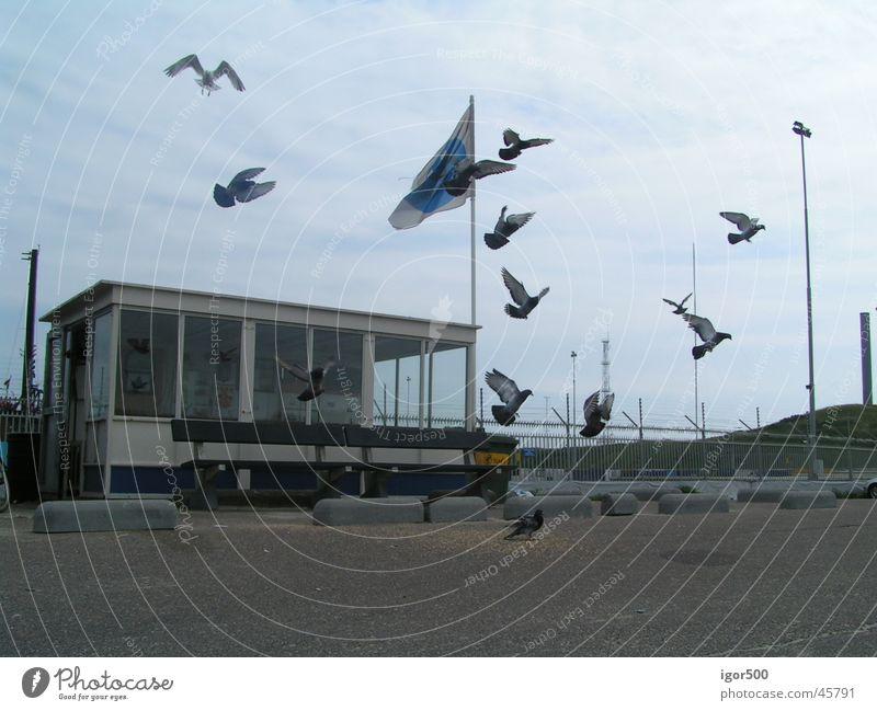 Tauben Dämmerung Hafen Bewegung