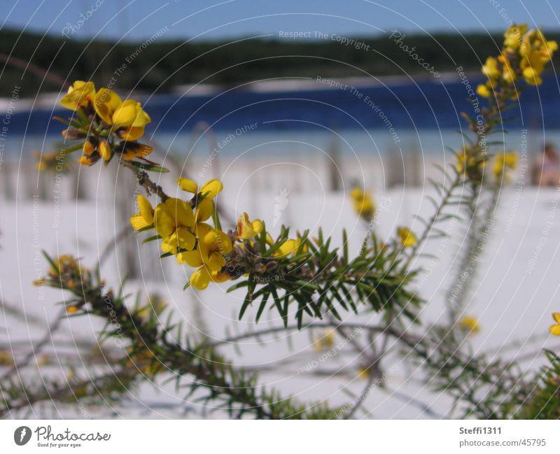 Lake McKenzie Australien See Blume Ferien & Urlaub & Reisen Strand Natur Sand