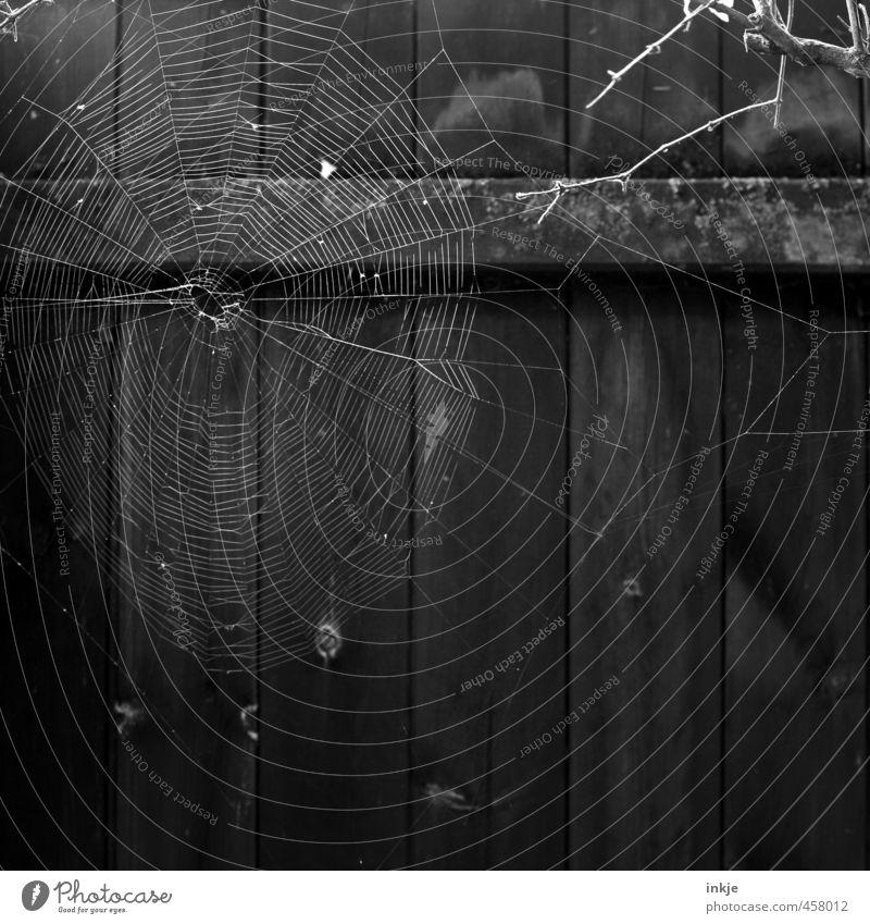 12:25 Uhr mittags Natur Menschenleer Zaun Bretterzaun Spinnennetz Spinngewebe Netz Netzwerk hängen warten dunkel dünn Ekel rund gewissenhaft fleißig Ausdauer