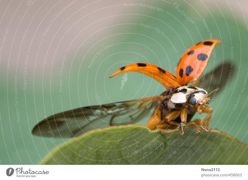 Guten Flug ins neues Jahr! :) Umwelt Natur Tier Luft Frühling Sommer Herbst Schönes Wetter Pflanze Blatt Garten Park Wiese Feld Wald fliegen