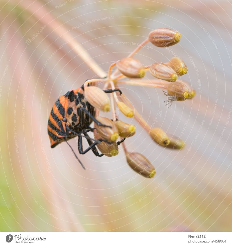 Festhalten! Natur Pflanze Sommer rot Erholung Tier Umwelt Wiese Bewegung Blüte Garten Luft Park orange Wind beobachten