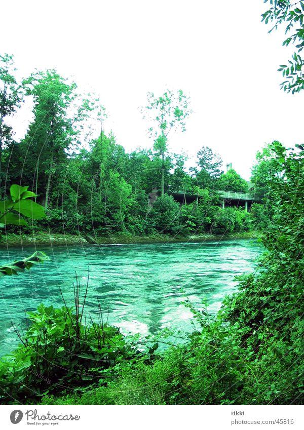 Aare Natur Wasser Fluss Sträucher Aare