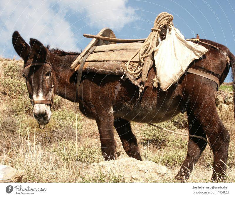 der Esel aus der Pampa Natur Tier Verkehr Landwirtschaft Griechenland Kreta