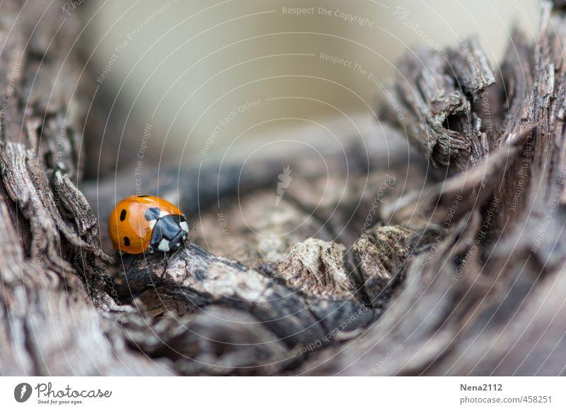 ... und Tiefe... Umwelt Natur Tier Luft Baum Garten Park Wald Käfer 1 kämpfen krabbeln laufen klein trist grau orange rot Marienkäfer Traurigkeit Punktmuster
