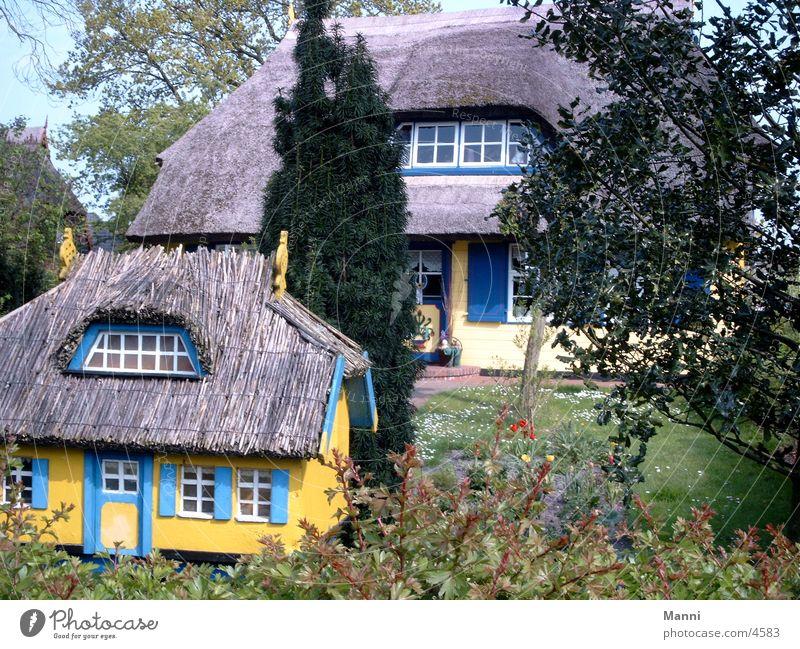 Reetdachhaus Haus Architektur Riedgras