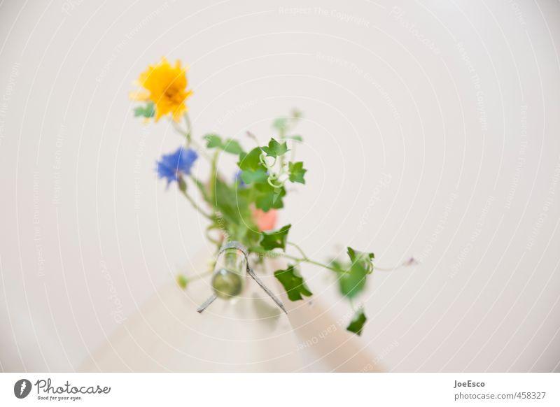 #458327 Stil Häusliches Leben Wohnung Dekoration & Verzierung Pflanze Blume schön Leichtigkeit leicht Blumenvase Blumenstrauß frisch Frühling Blatt Ranke