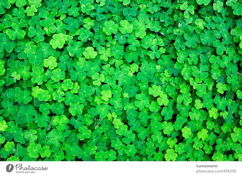 Viel Glück! Umwelt Pflanze Grünpflanze Klee Kleeblatt Glücksklee Wachstum Freundlichkeit Fröhlichkeit frisch schön klein viele grün Gefühle bescheiden Hoffnung
