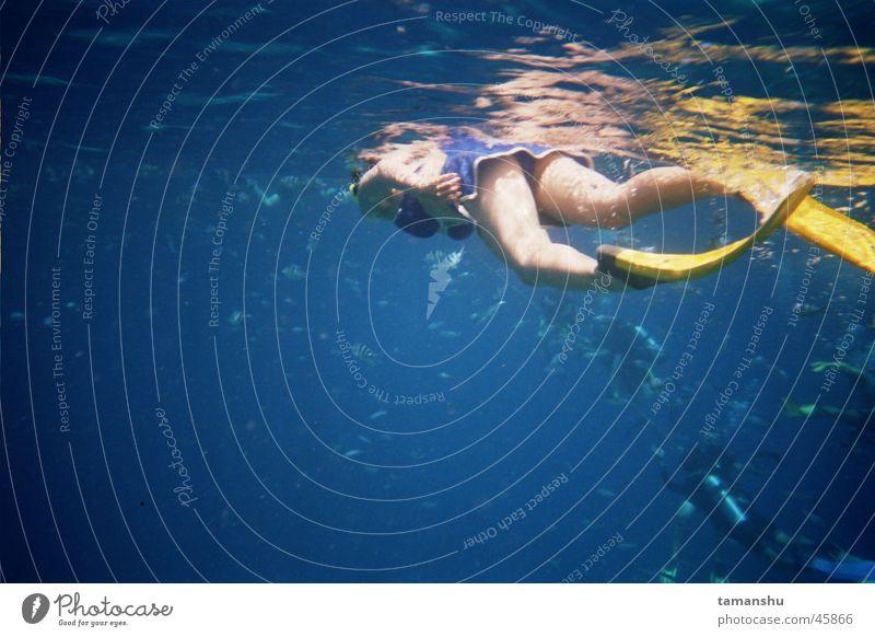 taucher Wasser Meer Fisch tauchen Taucher