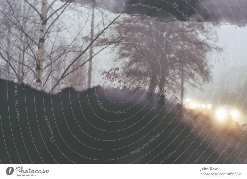 Herbststau Pflanze Baum Sträucher Verkehr Verkehrswege Straßenverkehr Autofahren grau Nebel Nebelschleier PKW Autoscheinwerfer leuchten Baumstamm Birke trist