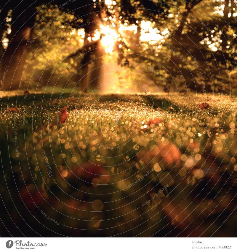 Goldener Morgen Umwelt Natur Pflanze Erde Sonne Sonnenaufgang Sonnenuntergang Sonnenlicht Sommer Schönes Wetter Nebel Gras Kitsch nass Wärme gold grün Tau Blatt