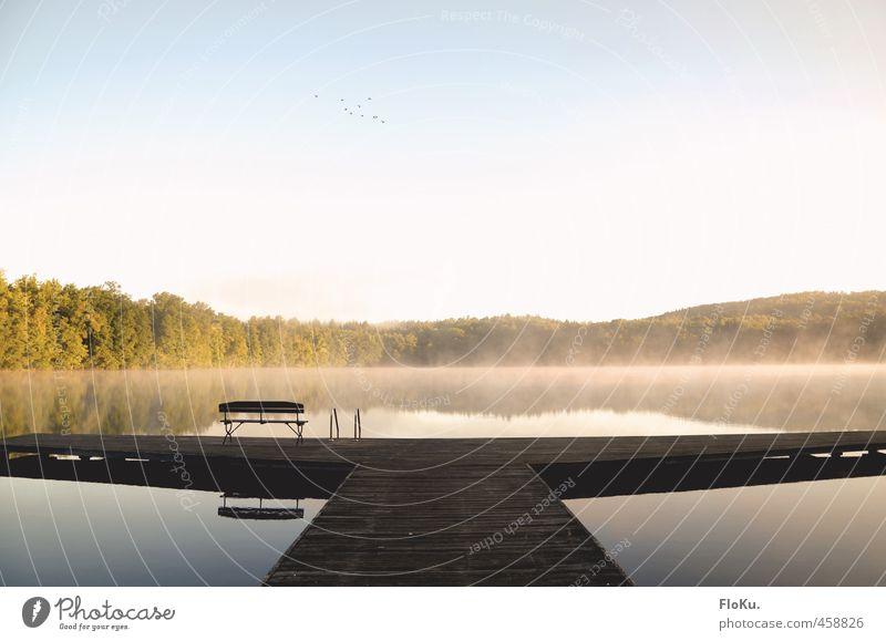 Morgenstund hat... nebel Ferien & Urlaub & Reisen Ausflug Freiheit Umwelt Natur Landschaft Wasser Wolkenloser Himmel Sonnenaufgang Sonnenuntergang Sommer