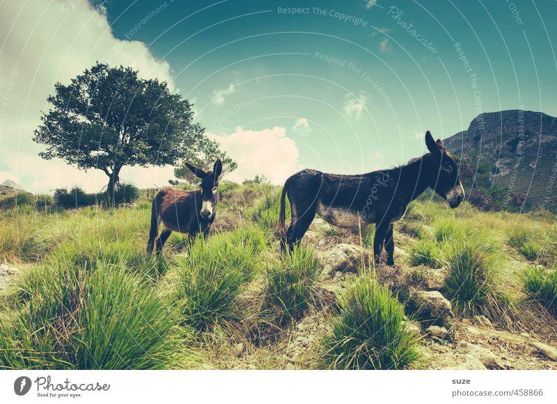 Einer von beiden ist ein Esel ... Himmel Natur Ferien & Urlaub & Reisen Sommer Sonne Baum Landschaft Tier Umwelt Berge u. Gebirge Wiese Reisefotografie Erde