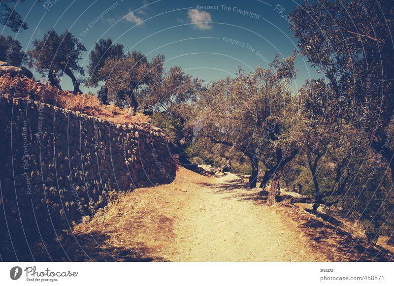 Der stille Pfad Himmel Natur Ferien & Urlaub & Reisen Sommer Baum Einsamkeit Landschaft Umwelt Wärme Wand Wege & Pfade Mauer Erde trist Schönes Wetter Spanien