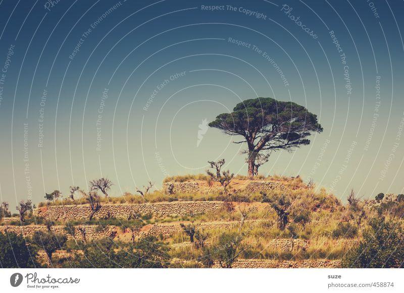 Die Krönung Ferien & Urlaub & Reisen Sommer Berge u. Gebirge Umwelt Natur Landschaft Wärme Baum Sträucher Gipfel Mauer Wand fantastisch trocken Einsamkeit