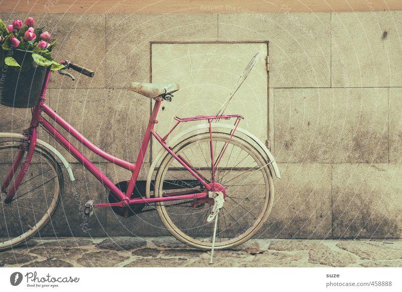 Mauer | mit freundlichen Grüßen alt Blume Wand feminin Stil rosa Freizeit & Hobby Fahrrad Lifestyle authentisch stehen kaufen retro Fahrradfahren Tulpe