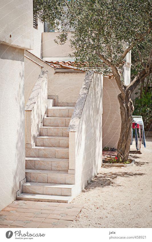 hinterhof Baum Haus Architektur Gebäude hell Fassade Treppe ästhetisch Bauwerk Kroatien