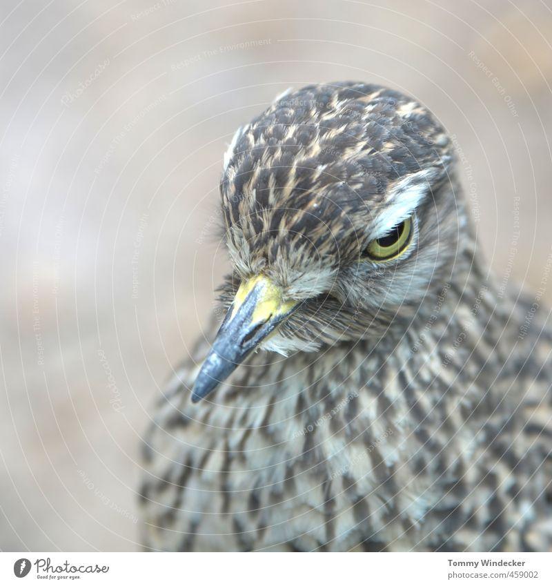 Durchblick Natur Tier Luft Wald Wildtier Vogel 1 Blick sitzen Tierliebe Wachsamkeit Freiheit Idylle Umwelt Feder Schnabel Biologie Naturwissenschaft Auge