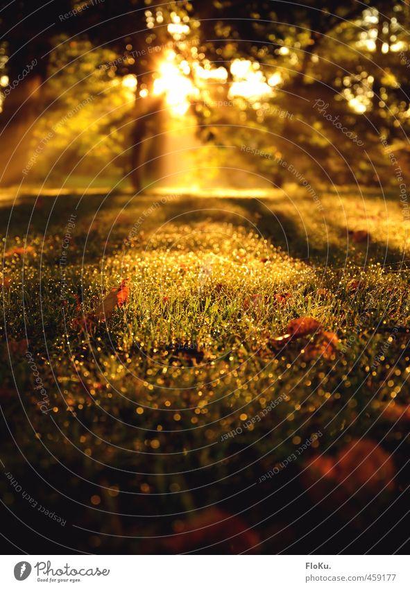 Sun approves Umwelt Natur Landschaft Pflanze Erde Wassertropfen Sonne Sonnenaufgang Sonnenuntergang Sonnenlicht Herbst Schönes Wetter Nebel Gras Wiese Feld Wald