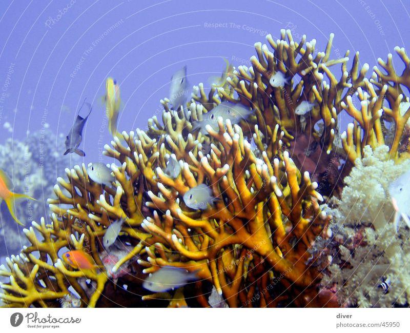 Sealife Wasser Meer Fisch Unterwasseraufnahme erleben Korallen