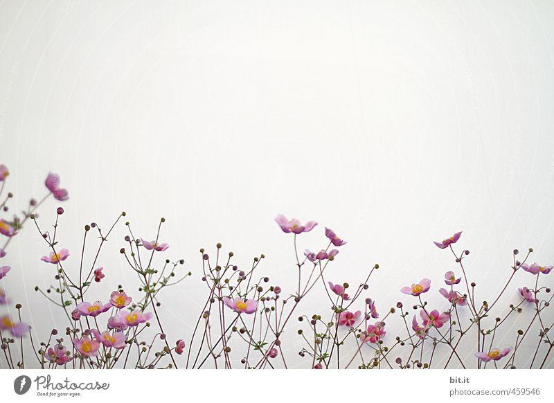 neue Frühlingskollektion Natur schön Sommer weiß Blume Blüte Liebe natürlich Glück Garten Fassade rosa Dekoration & Verzierung Geburtstag Blühend
