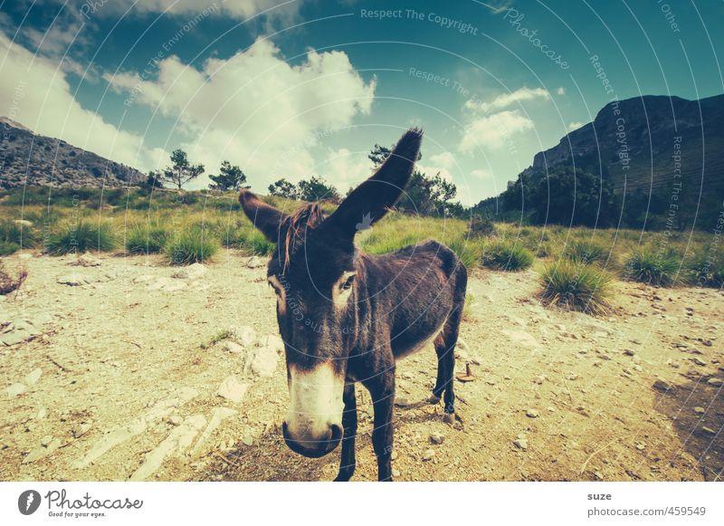 Tier | mit langen Ohren Himmel Natur Ferien & Urlaub & Reisen Sommer Landschaft Umwelt Berge u. Gebirge Wiese Reisefotografie Erde trist Urelemente niedlich
