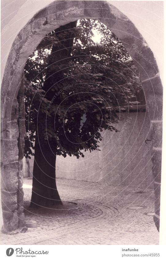 Torbaum Baum Einfahrt Schwarzweißfoto Bogen Pflastersteine
