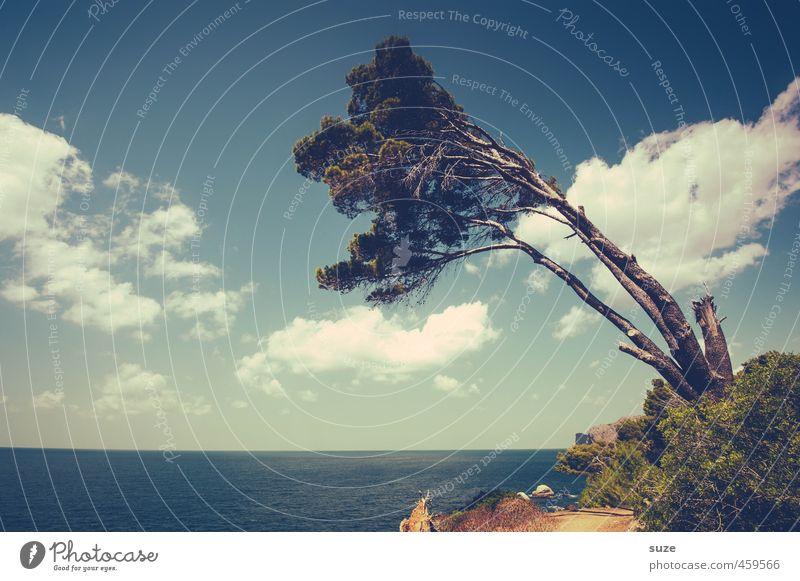 Zuneigung Himmel Natur Ferien & Urlaub & Reisen schön Sommer Baum Meer Landschaft Wolken Umwelt Wege & Pfade Küste Horizont Freizeit & Hobby Wind Tourismus