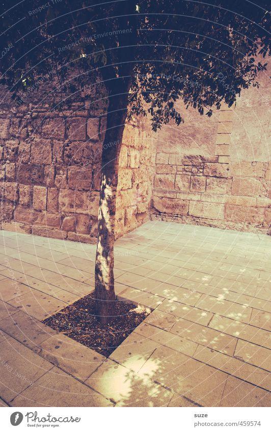 Pflanze | Gefangenschaft Dekoration & Verzierung Natur Erde Baum Stadt Platz Mauer Wand Stein dünn historisch trist trocken Wärme braun Mallorca zierlich