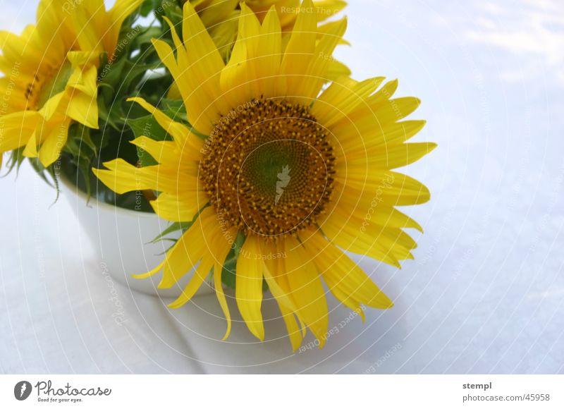 Sonnenblumen Sommer gelb