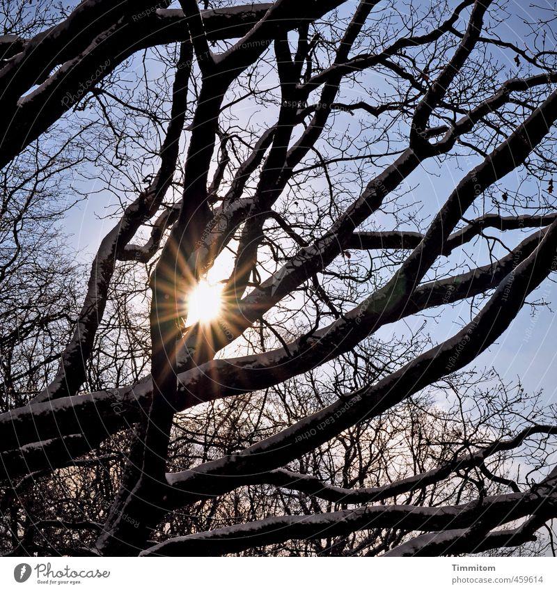 Gute Aussichten. Umwelt Natur Himmel Sonne Sonnenlicht Winter Schönes Wetter Baum Wald ästhetisch natürlich blau schwarz weiß Gefühle Lebensfreude Ast Schnee