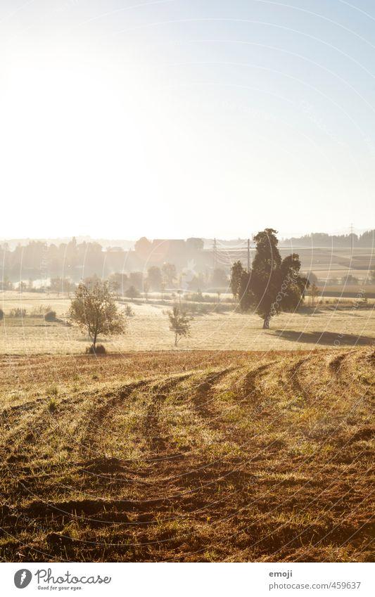 Spätsommer Natur Sommer Landschaft gelb Umwelt Wärme braun Feld Klima Schönes Wetter Landwirtschaft