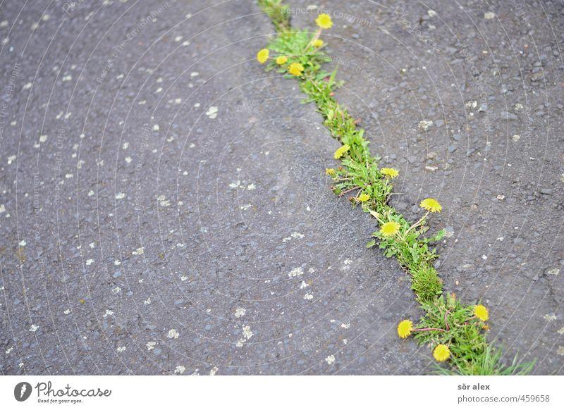 zukunft ohne menschen Natur Stadt Pflanze Blume Umwelt Leben Gras grau Blüte natürlich Kraft Wachstum Platz kaputt Vergänglichkeit Wandel & Veränderung