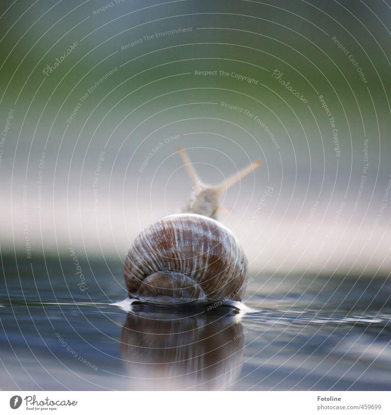 Tiere | Nicht drängeln!! Natur Wasser Sommer Umwelt klein natürlich hell Wildtier frei nass Urelemente nah Schnecke krabbeln langsam