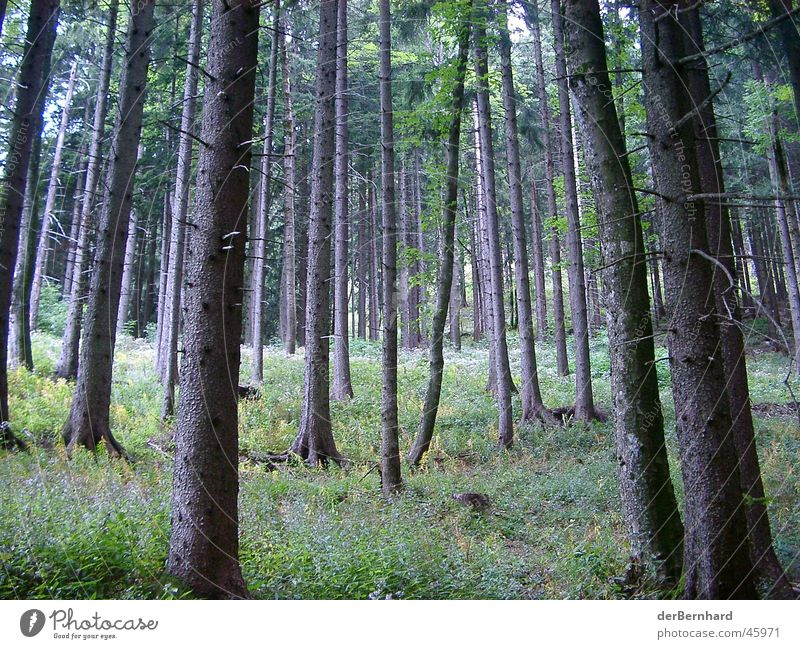 Bergwald Wald Baum Wiese Waldlichtung grün Berge u. Gebirge Natur Landschaft