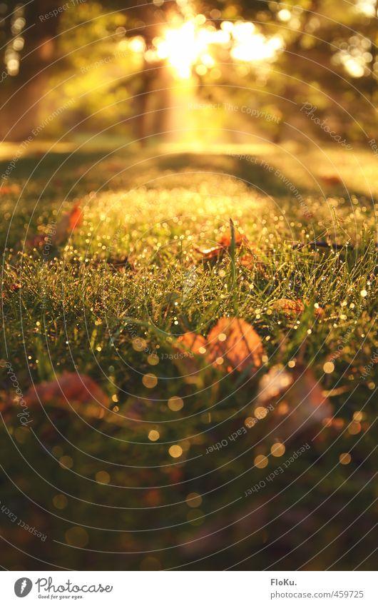 Goldener September Umwelt Natur Pflanze Erde Wassertropfen Sonnenaufgang Sonnenuntergang Sonnenlicht Sommer Herbst Schönes Wetter Gras Blatt Garten Wiese
