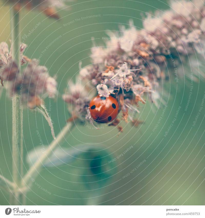 perle der natur Umwelt Natur Tier Pflanze Blume Gras Wildpflanze Käfer 1 Zeichen ästhetisch niedlich weich grün rot Glück Idylle einzigartig Marienkäfer 4 sanft