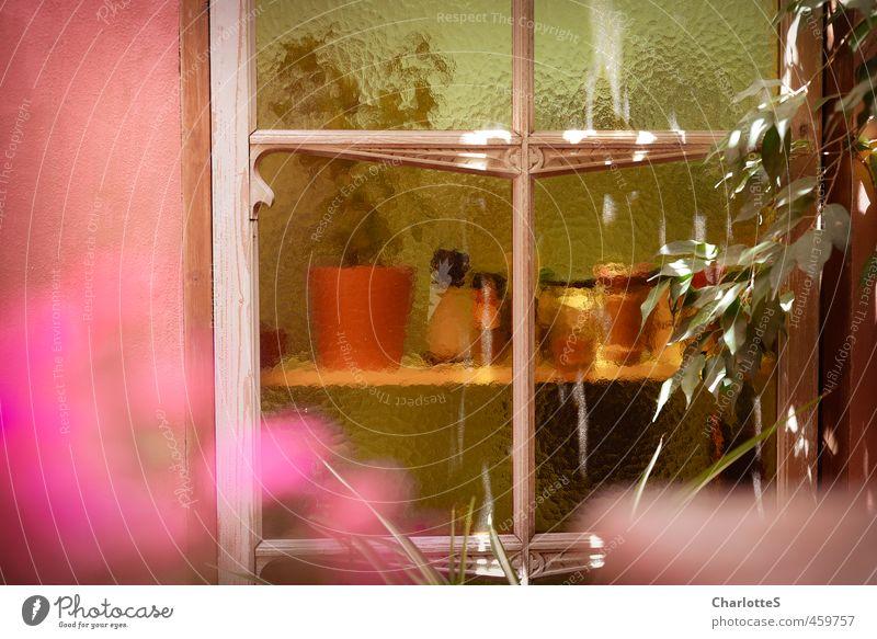 Postcard from the Yard Pflanze Erholung Blatt Leben Stil rosa elegant Design Dekoration & Verzierung retro Spanien violett Duft harmonisch Mallorca Meditation