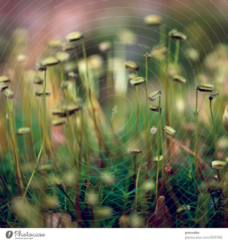 moosaik Natur Pflanze Urelemente Erde Herbst Gras Moos Wald Fröhlichkeit Zufriedenheit Lebensfreude Warmherzigkeit weich Warme Farbe Mikrofotografie Zwerg Elfe