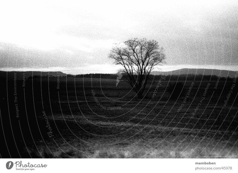 Analogue Tree Wiese Baum analog Natur Schwarzweißfoto