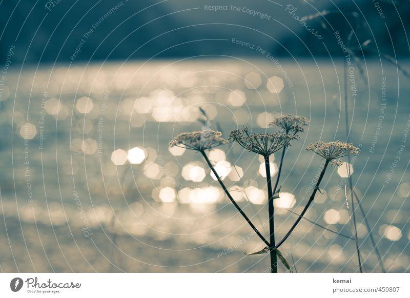 Am See Umwelt Natur Landschaft Pflanze Wasser Sonnenlicht Sommer Schönes Wetter Blume Gras Seeufer Vilsalpsee glänzend Wachstum ruhig Farbfoto Gedeckte Farben