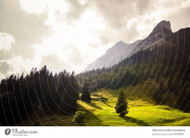 HALLO, goldener herbst Natur Ferien & Urlaub & Reisen grün Baum Erholung ruhig Landschaft Wolken Ferne Wald Umwelt Berge u. Gebirge Herbst Gras Freiheit Felsen