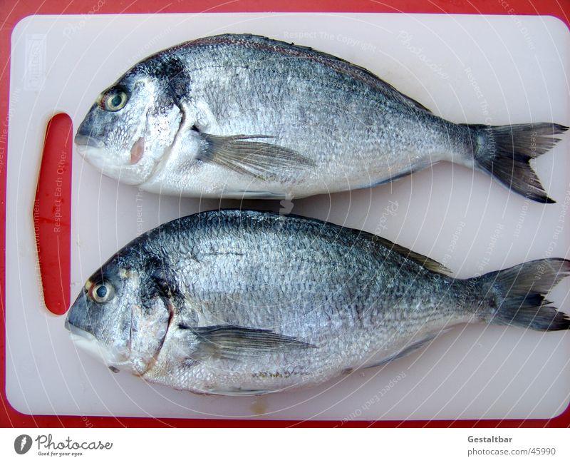 due orate Ernährung frisch Fisch Küche fangen silber Holzbrett Angeln Schwanz Scheune Schwimmhilfe Holz Mittelmeer gestaltbar Kieme Orata
