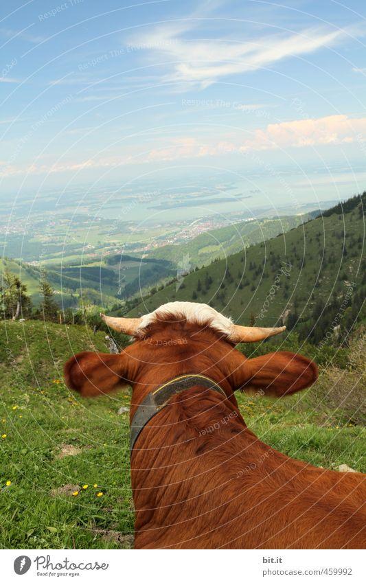 AST6 Inntal | Milchträume... Natur Ferien & Urlaub & Reisen Erholung Landschaft ruhig Tier Ferne Wald Berge u. Gebirge Umwelt Wiese natürlich Tourismus wandern Aussicht Ausflug